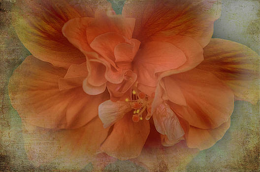 Shades of Orange by Judy Hall-Folde