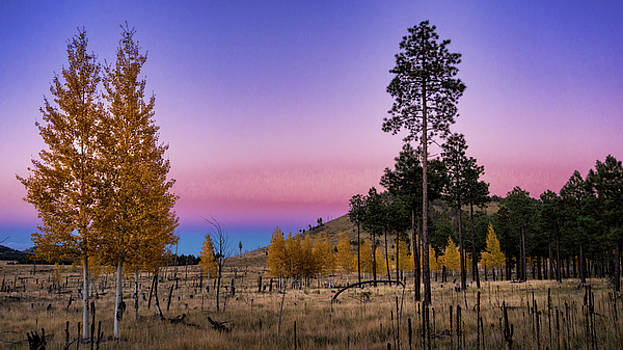 Saija Lehtonen - Shades of Pink Autumn Sunset