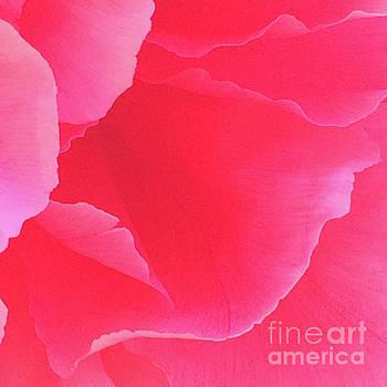Shades Of Pink Peony by Jacklyn Duryea Fraizer