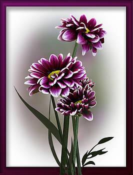 Shades of Purple by Judy Johnson