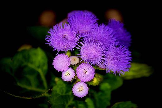 Karen Scovill - Shades of Purple