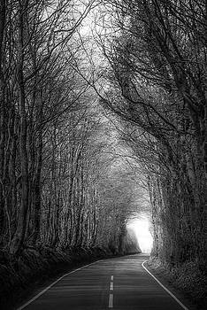 Svetlana Sewell - Shadow of Trees