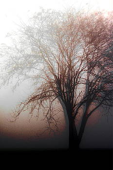 Shadow Tree by Kim Lentz
