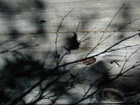 Shadow Wood by Mark Stevenson