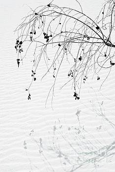 Shadowed Branch by Glennis Siverson