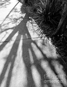 Shadowed by Katherine Erickson