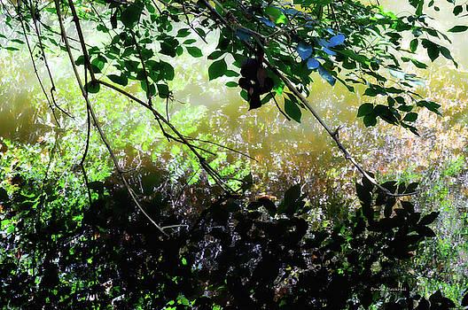 Donna Blackhall - Shadowed Reflections