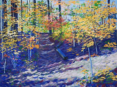 Shadowed Trail by David Carson Taylor