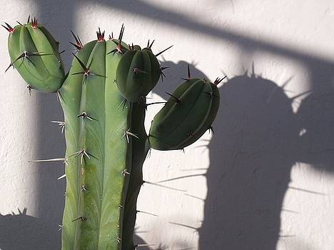Shadows And Spines by Kathy Simandl