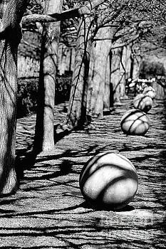 Shadows by Anna Sheradon