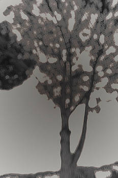 Shadows by Luigi Inzeo