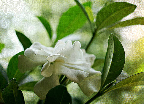 Shadows of a Sweet Gardenia by Kathy Bucari