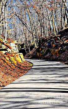 Shadows On The TRail by Kathleen Struckle