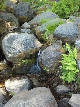 Shady Creek by Brooke Finley