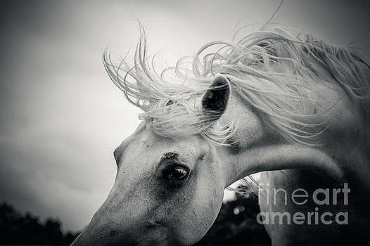 Dimitar Hristov - Shaggy morning horse