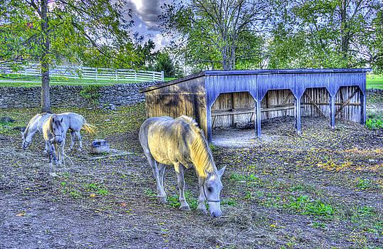 Sam Davis Johnson - Shaker Horses 3