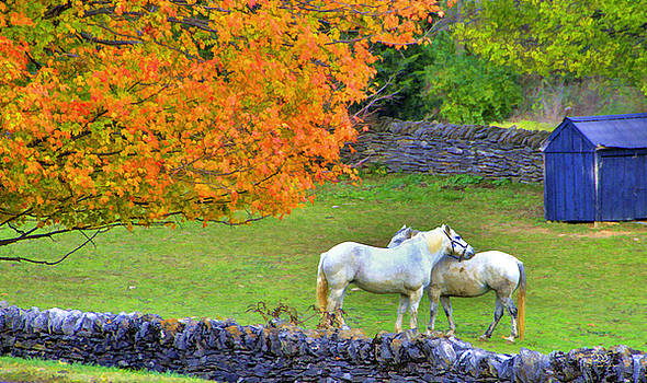 Sam Davis Johnson - Shaker Horses and Stone Fences
