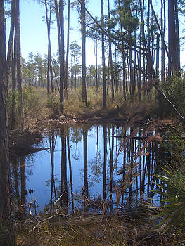 Shallow Pond by Steve Ellis