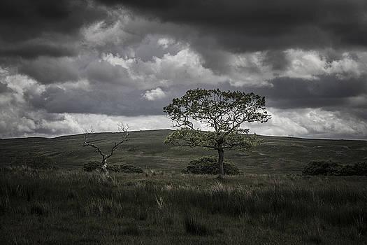 Stewart Scott - Shaman in the hills