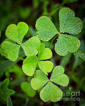 Shamrock Green by Kerri Farley