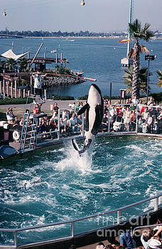 California Views Mr Pat Hathaway Archives - Shamu the Orca Sea World San Diego 1967