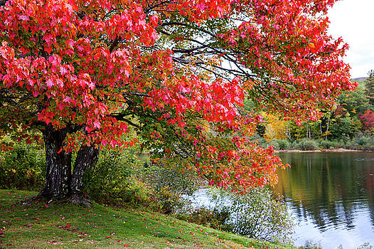 Shannon Pond by Robert Clifford