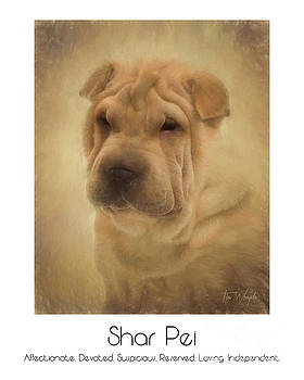 Shar Pei Poster by Tim Wemple