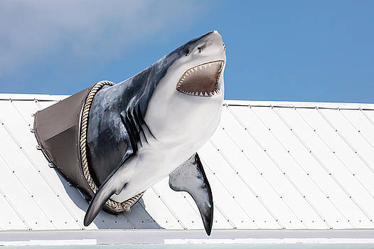 Shark Attack by Art Block Collections