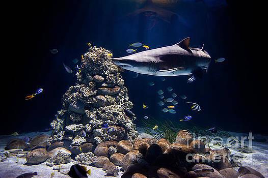 Shark in zoo aquarium by Arletta Cwalina