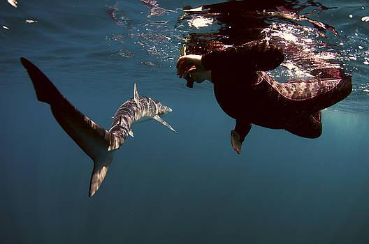 Shark Swim By by Greg Amptman
