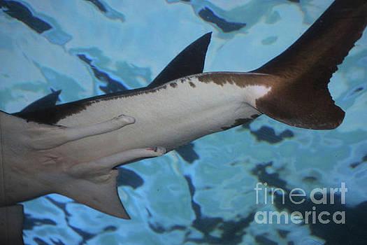 Paulette Thomas - Shark Tail