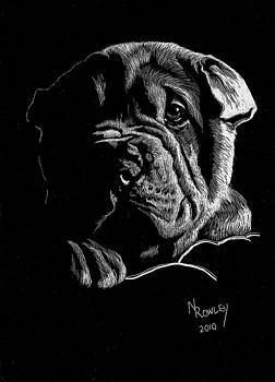 Sharpei Puppy by Norma Rowley