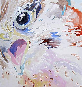 Sharpshin Hawk by Lea Cox