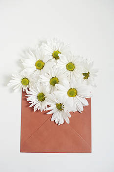 Shasta Daisies in Orange Envelope by Di Kerpan