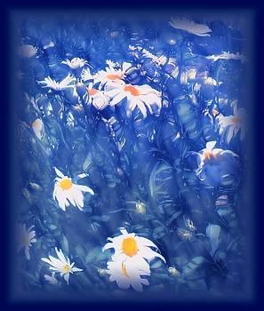 MTBobbins Photography - Shasta Daisy Abstract
