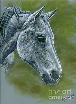 Shay - The Dappled Gray by Norma Rowley