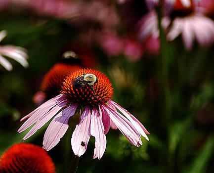 Clayton Bruster - She Loves Bee She Loves Bee Not
