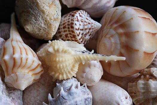 She Sells Seashells By The Seashore by Sheryl Chapman Photography