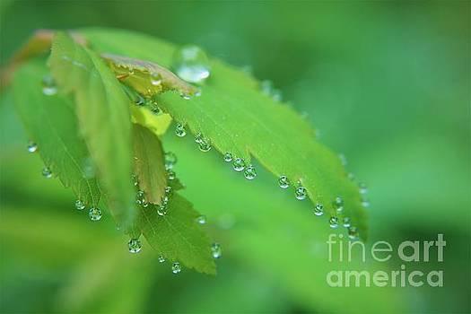 She Wears Diamond Raindrops by Dee Winslow