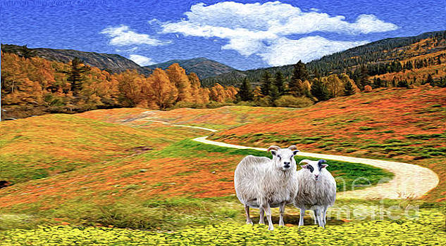 Sheep and Road Ver 2 by Larry Mulvehill