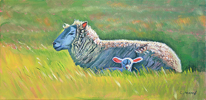 Colleen Proppe - Sheep at Red Hill Farms