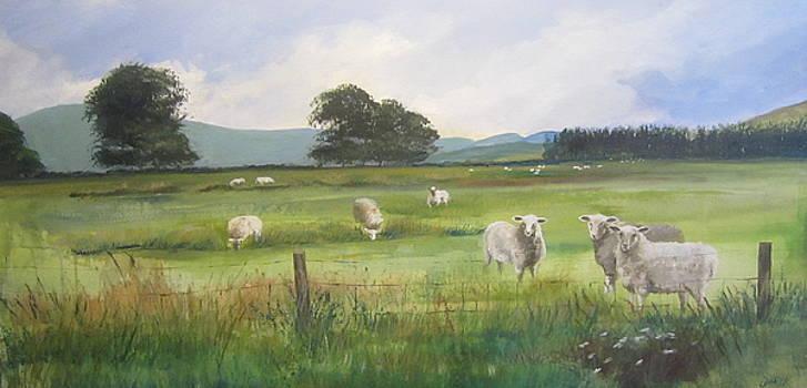 Sheep at Strathcarron by Cindie Reiter