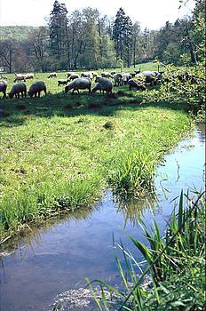 Flavia Westerwelle - Sheep