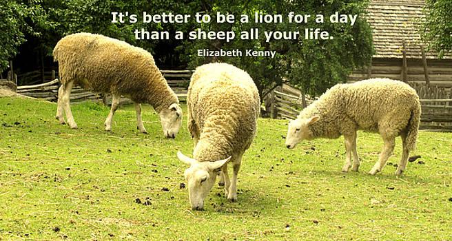 Ian  MacDonald - Sheep For Life