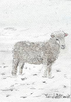 Sheep by Linda Clark