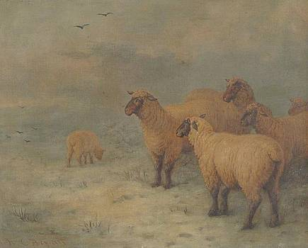 Sheep on Moorland by MotionAge Designs