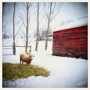 Sheep and Red Barn by Robert Cattan