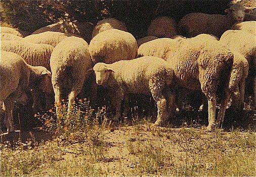 Stephen Hawks - Sheep