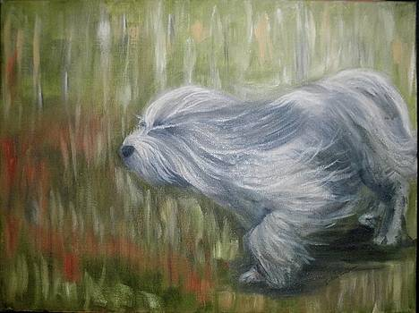 Sheepdog on the Run by Betsy Cullen