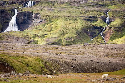 Francesco Riccardo Iacomino - Sheeps and landscape, Iceland